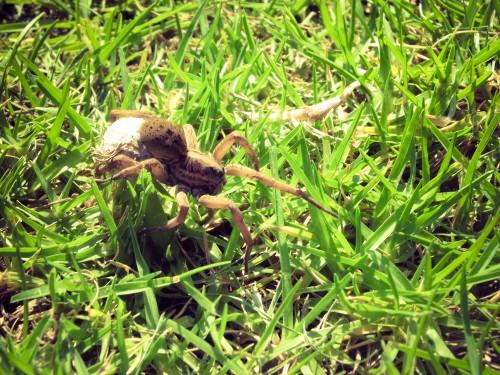 Ben the garden spider